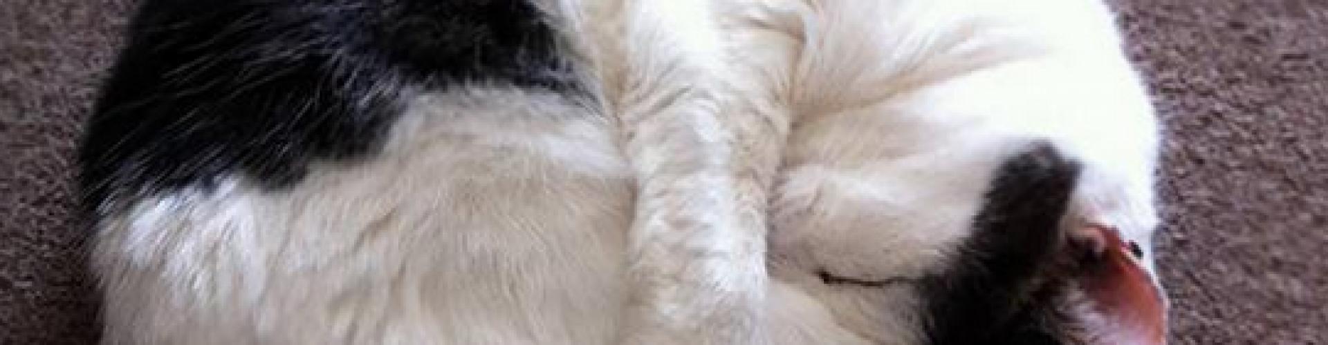 catstretch